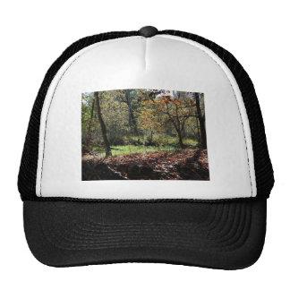 woods in autumn trucker hat