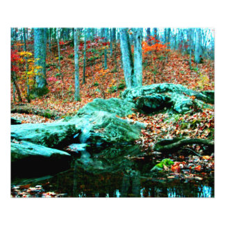 Woods Photographic Print