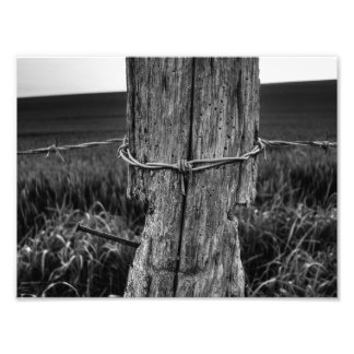 Woodworm Photograph