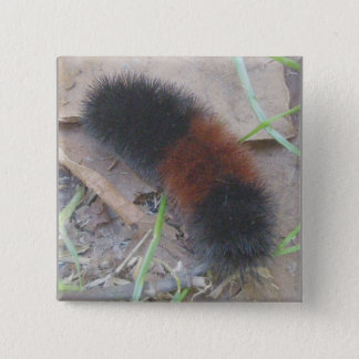 Woolly Bear Caterpillar Button