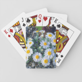 Woolly Daisy Wildflowers Playing Cards