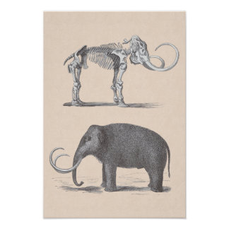 Woolly Mammoth and Skeleton Prehistoric Animals Poster