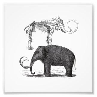 Woolly Mammoth Prehistoric Elephant and Skeleton Photo