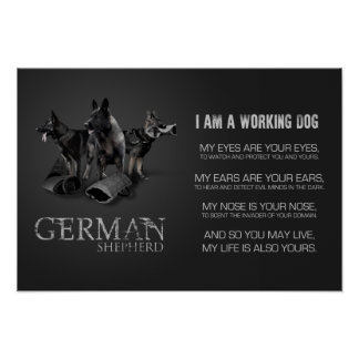 Working German Shepherd Dog  - GSD Poster