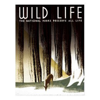 WPA - Wild Life Postcard