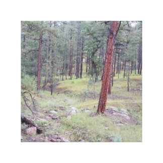 WRAPPED CANVAS WALL HANGING OF GILA FOREST CANVAS PRINTS