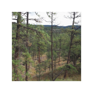 WRAPPED CANVAS WALL HANGING OF GILA FOREST STRETCHED CANVAS PRINT