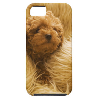 Wrapped up Poodle iPhone 5 Case