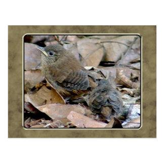Wren Baby Bird Postcard