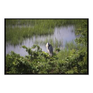 Wren in the Marsh Photo
