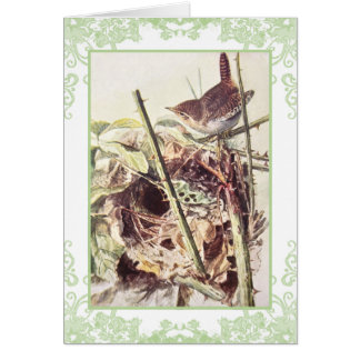 Wren vintage birthday card