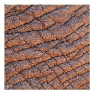 Wrinkly Elephant Skin Texture Template Photo