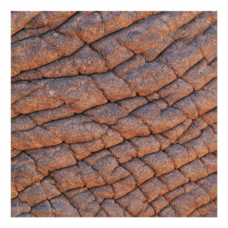 Wrinkly Elephant Skin Texture Template Photograph
