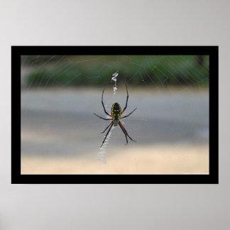 Writing Spider (Argiope Aurantia) Poster