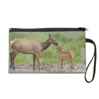 WY, Yellowstone National Park, Elk calf and Wristlet Purse