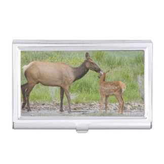 WY, Yellowstone National Park, Elk calf and Case For Business Cards