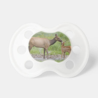WY, Yellowstone National Park, Elk calf and Baby Pacifier