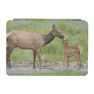 WY, Yellowstone National Park, Elk calf and iPad Mini Cover