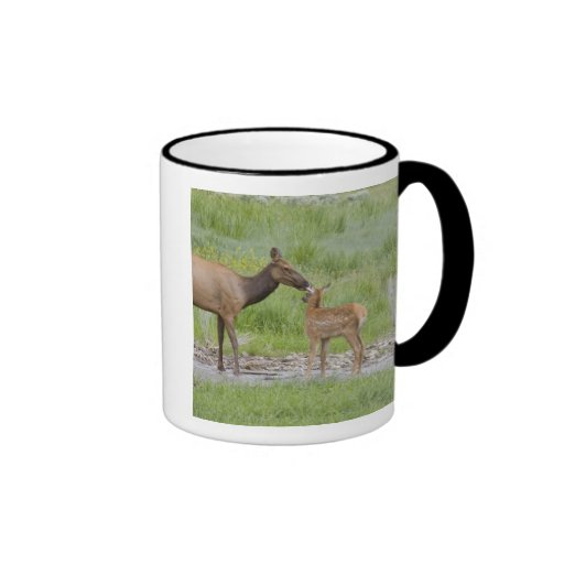 WY, Yellowstone National Park, Elk calf and Coffee Mug