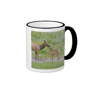 WY, Yellowstone National Park, Elk calf and Ringer Mug