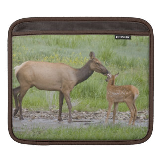WY, Yellowstone National Park, Elk calf and Sleeve For iPads