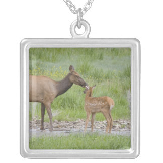 WY, Yellowstone National Park, Elk calf and Square Pendant Necklace