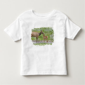 WY, Yellowstone National Park, Elk calf and Tshirt