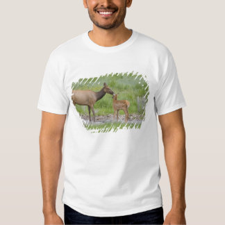 WY, Yellowstone National Park, Elk calf and Tshirts