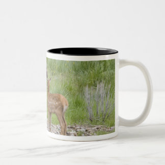 WY, Yellowstone National Park, Elk calf and Two-Tone Mug