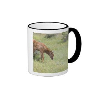 WY, Yellowstone National Park, Elk calf in Ringer Mug