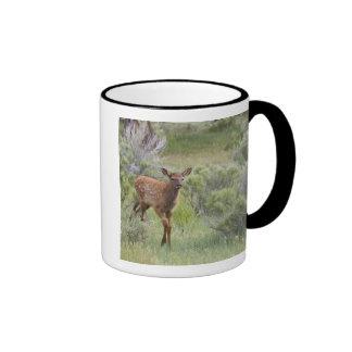 WY, Yellowstone National Park, Elk calf Ringer Mug