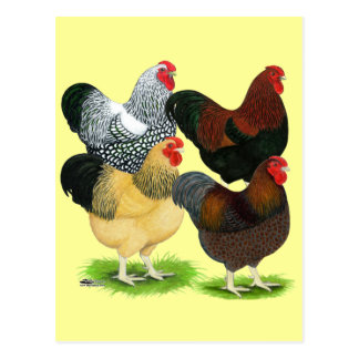 Wyandotte:  Rooster Assortment Postcard