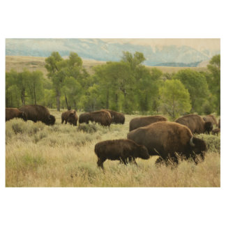 Wyoming Bison Nature Animal Photography Wood Poster