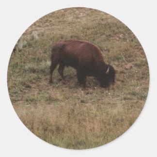 Wyoming Buffalo Sticker