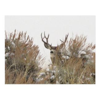 Wyoming Deer Postcard