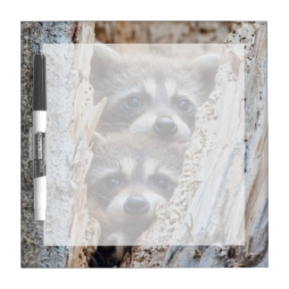 Wyoming, Lincoln County, Raccoon Dry Erase Whiteboards