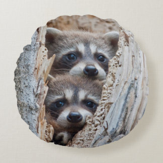 Wyoming, Lincoln County, Raccoon Round Cushion