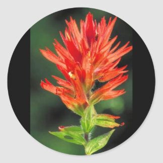 Wyoming Paintbrush Classic Round Sticker
