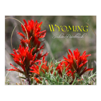 Wyoming State Flower: Indian Paintbrush Postcard