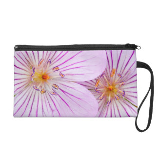 Wyoming, Sublette County, Close-up of two Sticky Wristlet
