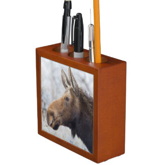 Wyoming, Sublette County, head shot of cow Moose Pencil/Pen Holder