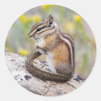 Wyoming, Sublette County, Least Chipmunk Round Sticker