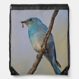 Wyoming, Sublette County, Male Mountain Bluebird Backpacks