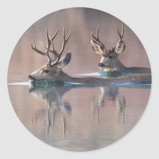 Wyoming, Sublette County, Mule deer bucks Round Sticker