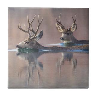 Wyoming, Sublette County, Mule deer bucks Tile