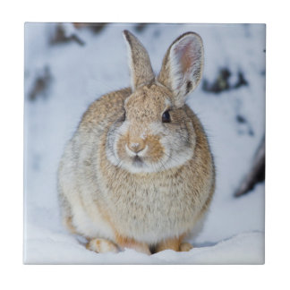 Wyoming, Sublette County, Nuttall's Cottontail 2 Ceramic Tile