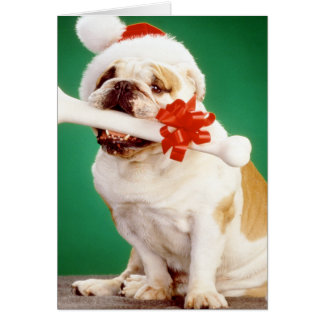 X-mas bulldog with x-mas hat and bone card