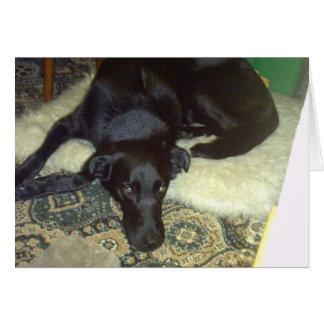 Xander Dog Card