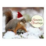 Xmas Squirrel in Snow Postcard
