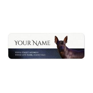Xoloitzcuinte Return Address Label